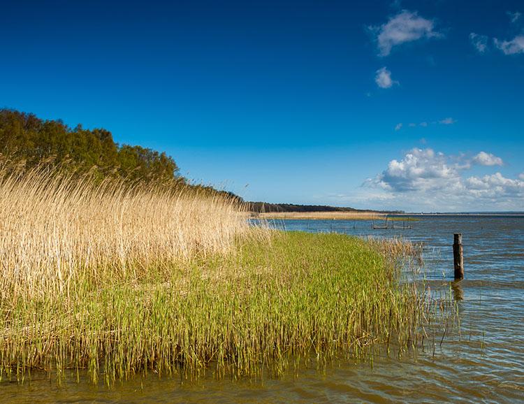 Die schilfigen Ufer des Lebasees