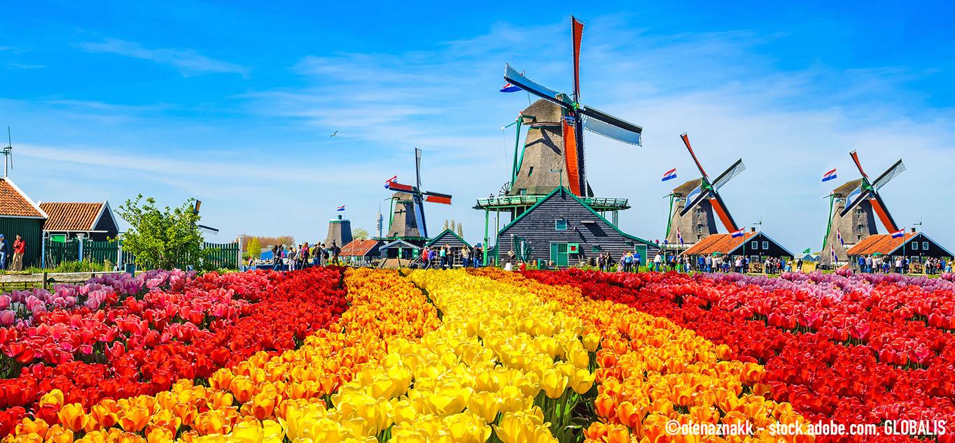 Mit MS Savor zur Tulpenblüte nach Holland und Belgien