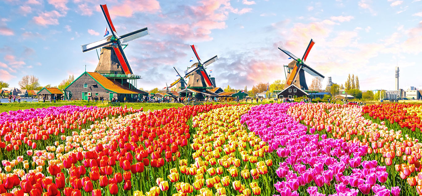 TTulpenblüte in Holland